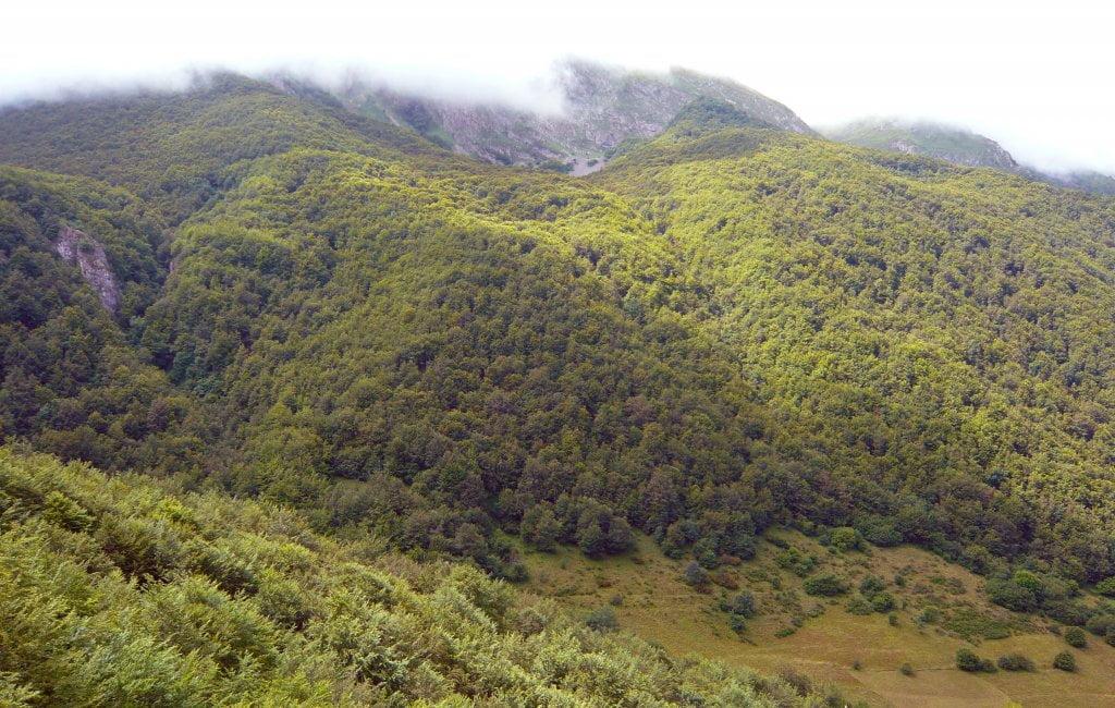 Hayedo de la Enraimada - Rutas desde Valle de Lago