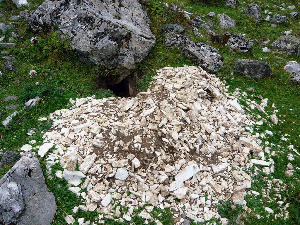 Madriguera de marmotas en el Valle de Benasque