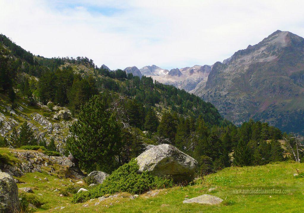Los pinos negros aparecen en las zonas altas en la ruta al Forau d´Aigualluts