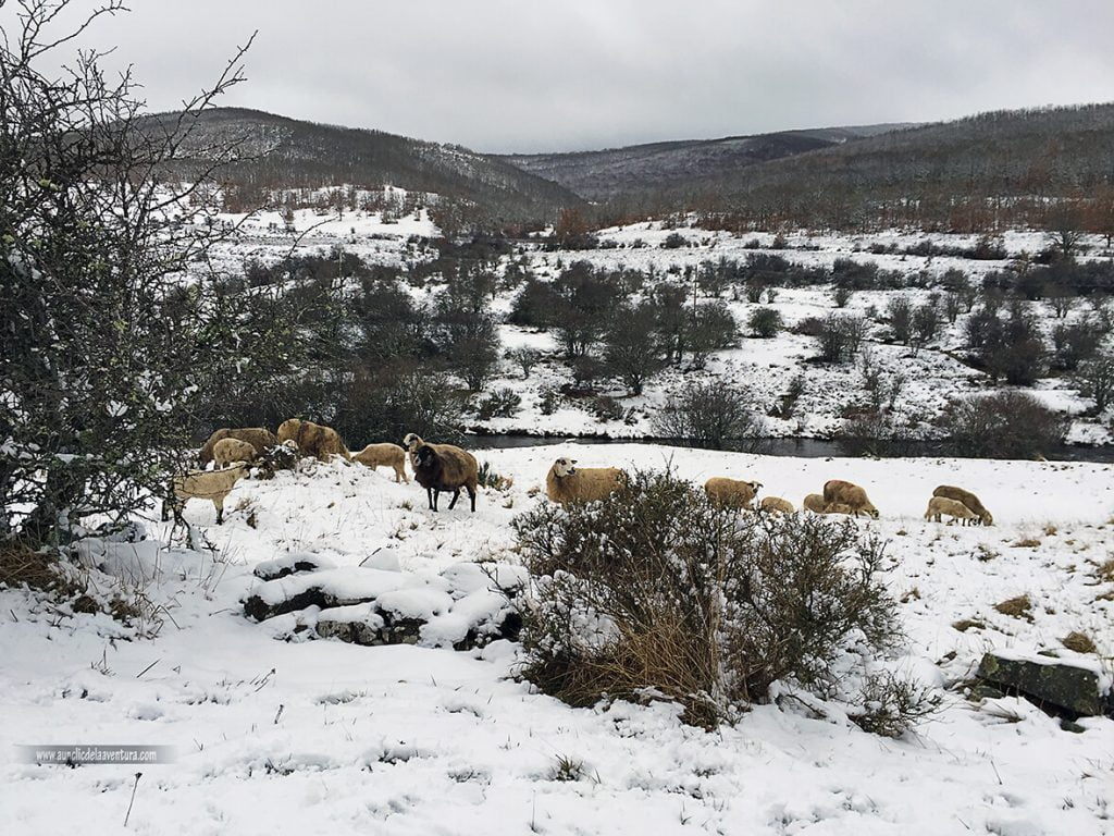 Camino de Pineda de la Sierra