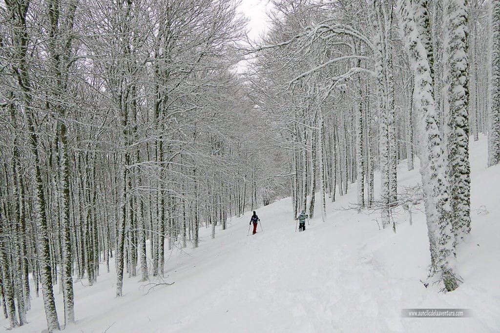 Ruta de raquetas dentro del hayedo con nieve en Pineda de la Sierra