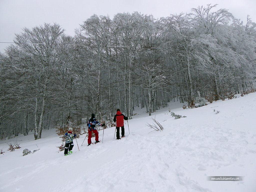 Entrando en el hayedo con nieve en Pineda de la Sierra