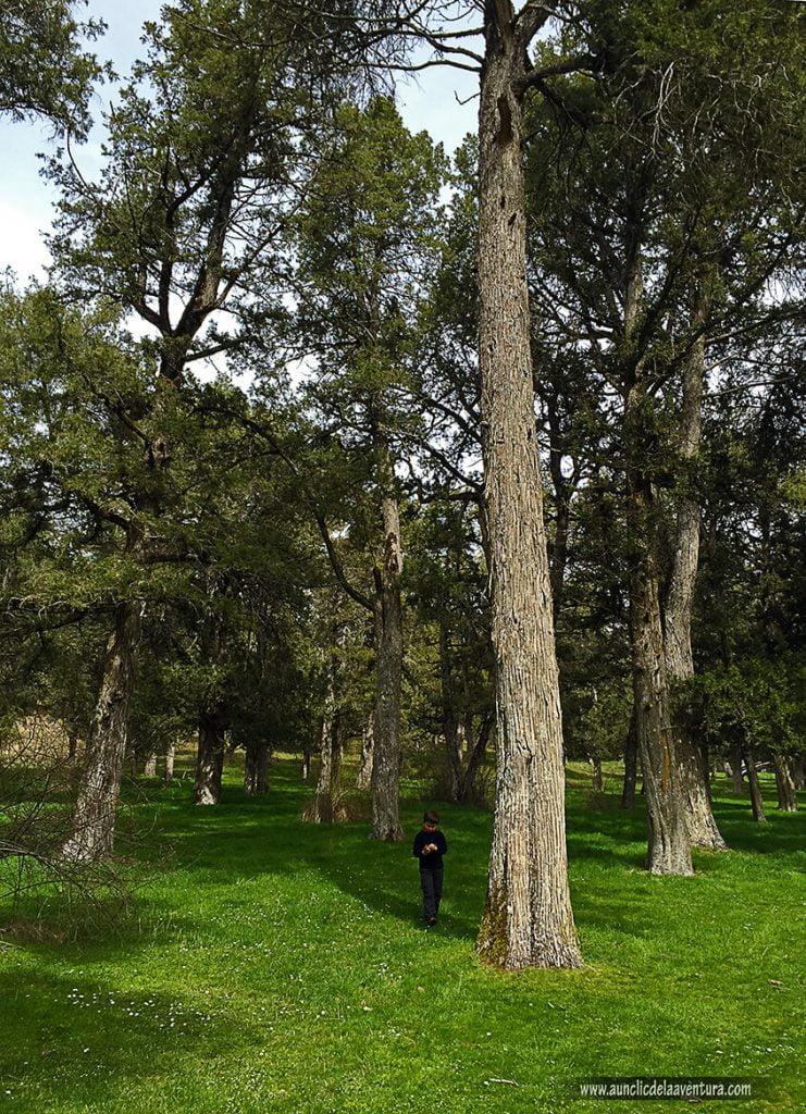 Sabinar de Calatañazor, que ver en Calatañazor