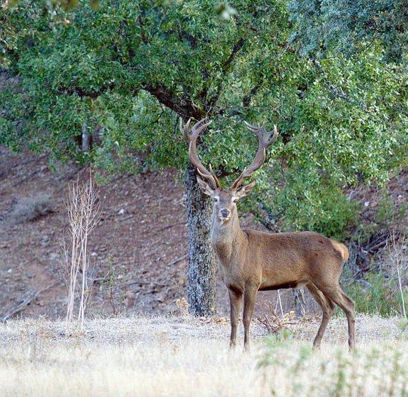 Berrea en Sierra Morena, fotografía de Medyr - escapadas de otoño en España
