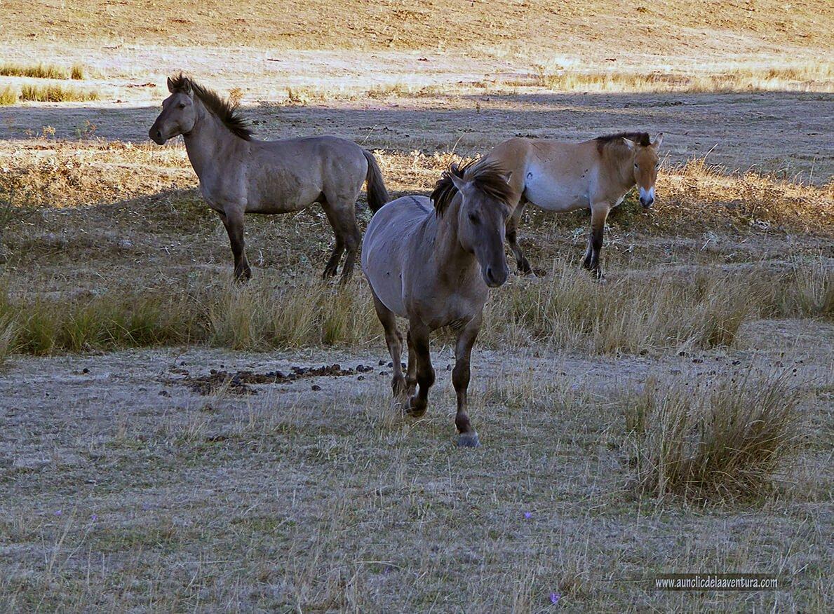 Los caballos salieron a nuestro encuentro