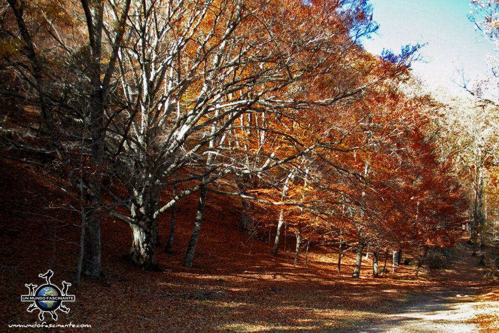 Hayedo de Montejo de la Sierra, Madrid - escapadas de otoño en España