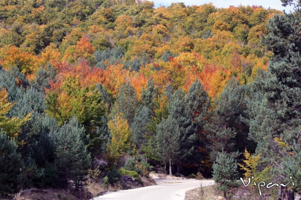 Colores de otoño en las inmediaciones de la Laguna Negra