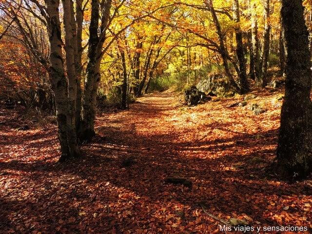 Hayedo de Tejera Negra en Cantalojas, Guadalajara - escapadas de otoño en España