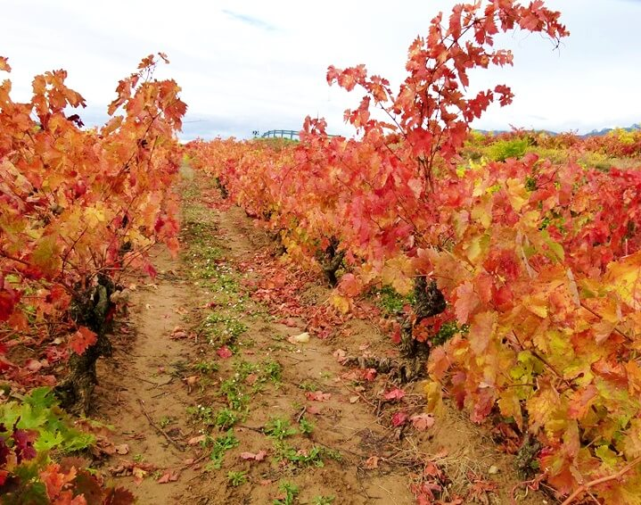Viñedos en la Rioja Alavesa - escapadas de otoño en España