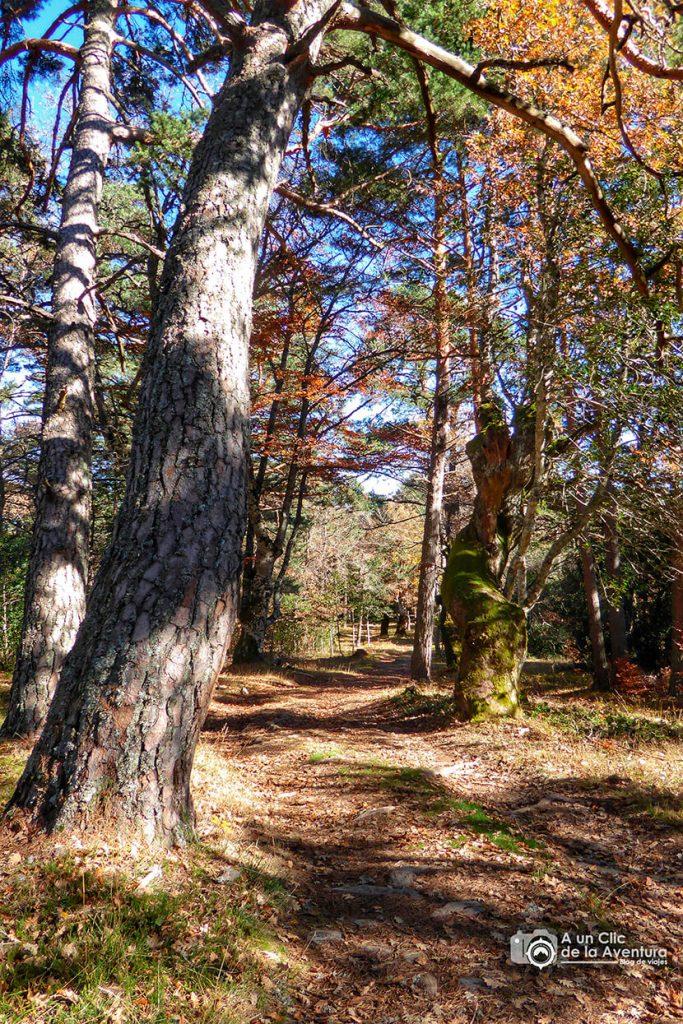 Bosque de la Dehesa de Huerta de Arriba