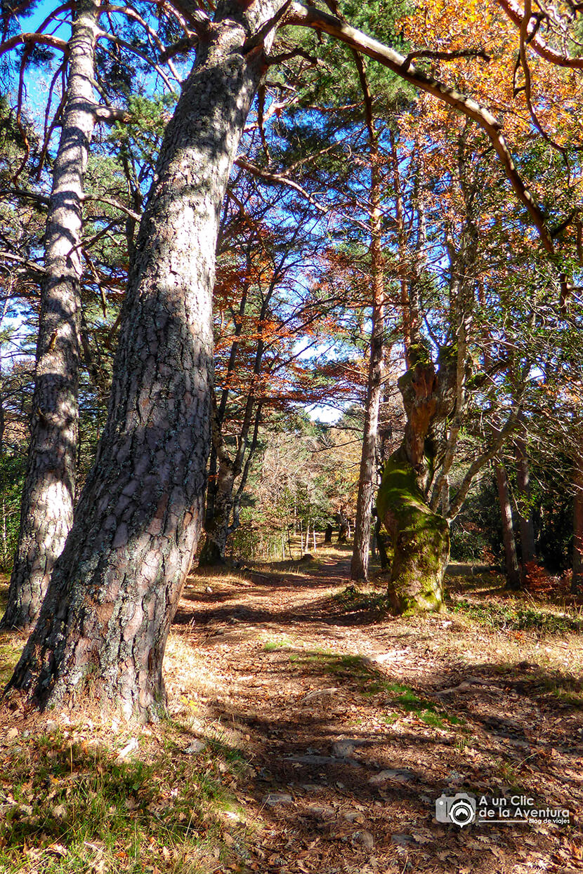 Bosque de Huerta de Arriba