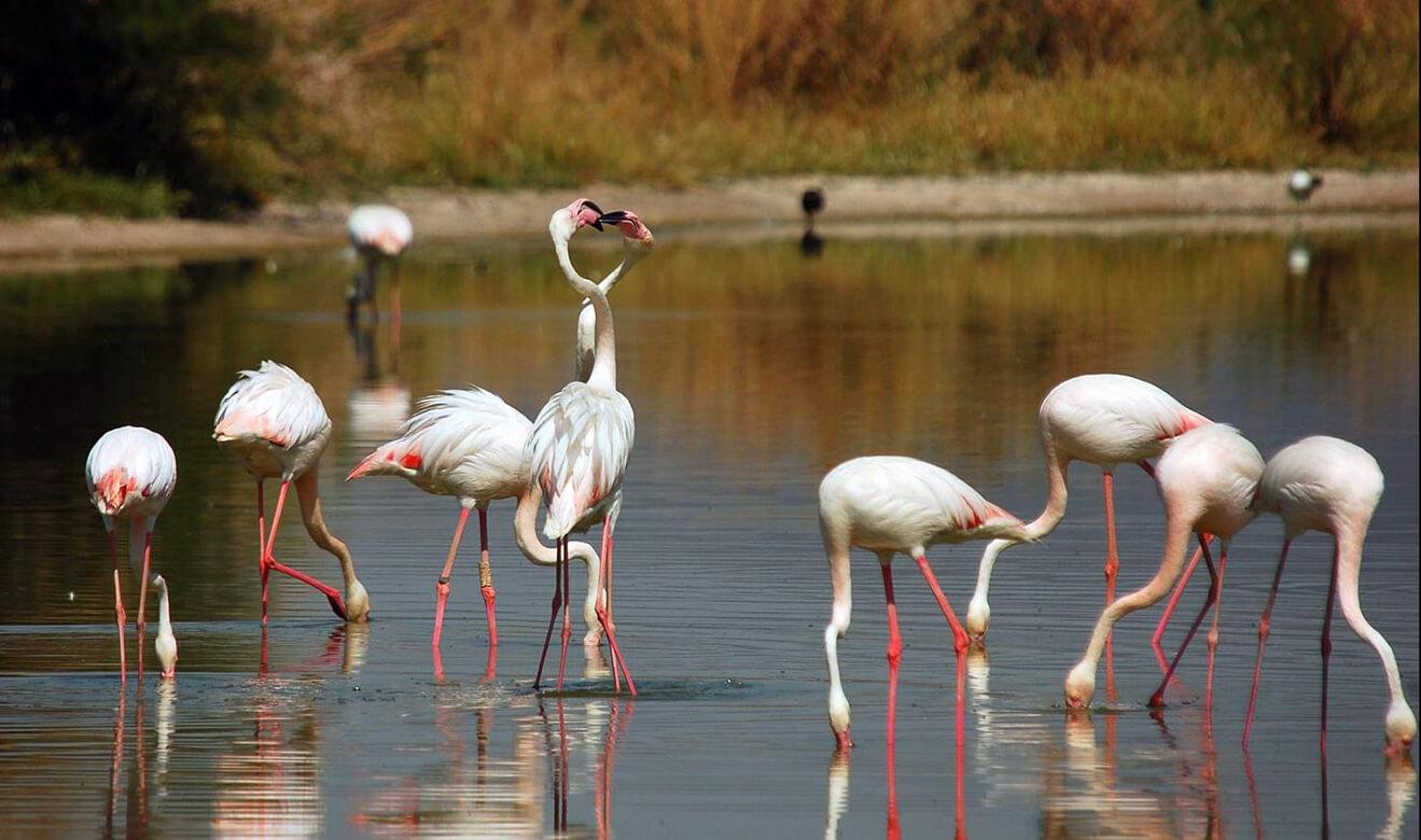 Flamencos rosados en la Laguna de Fuente de Piedra, Costa del Sol