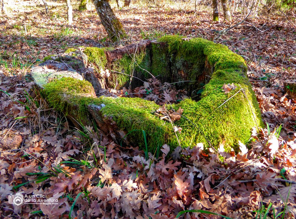 Lo que queda de uno de los robles que existieron aquí - Dehesa de Huerta de Arriba