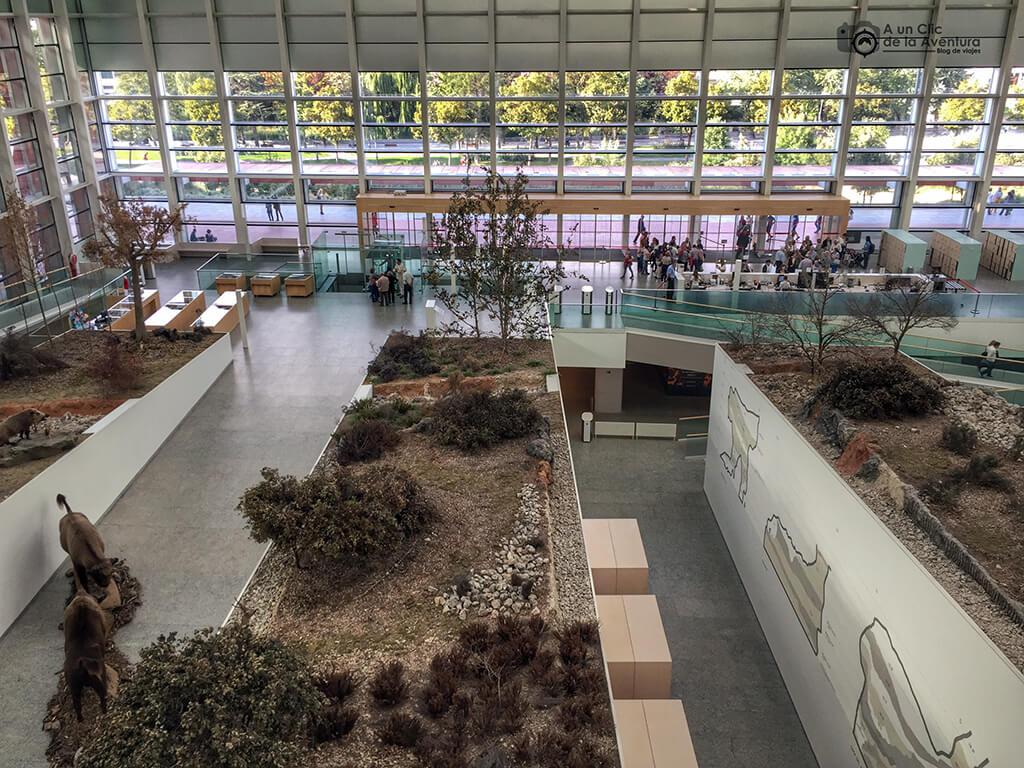 Interior del Museo de la Evolución Humana