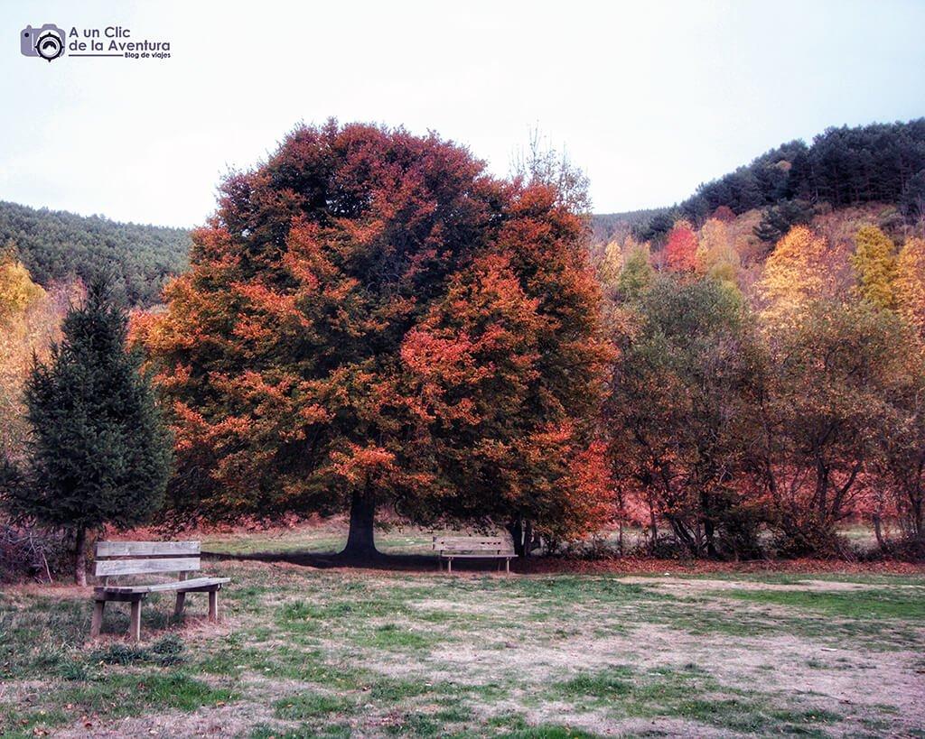Área Recreativa de Zarcia en otoño - hayedo del río Urbión