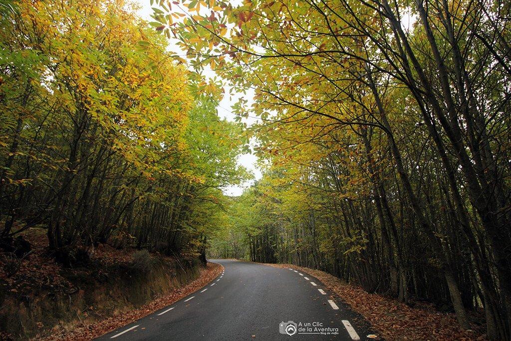 Bosque de castaños en la Sierra de Gata - Sierra de Gata en familia