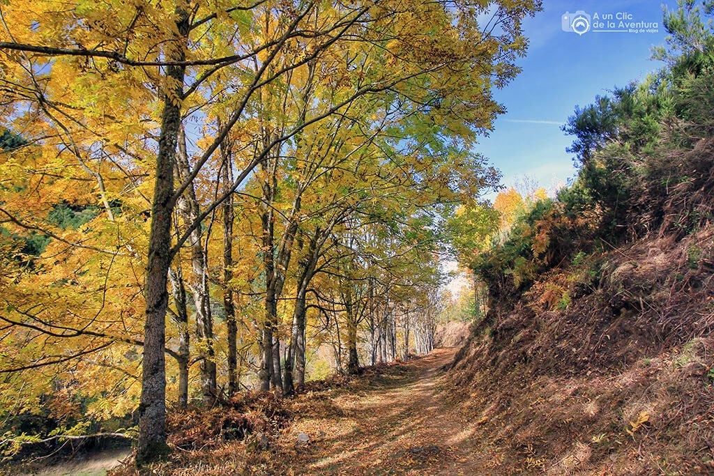 Los árboles nos proporcionan sombra durante todo el camino - hayedo del río Urbión