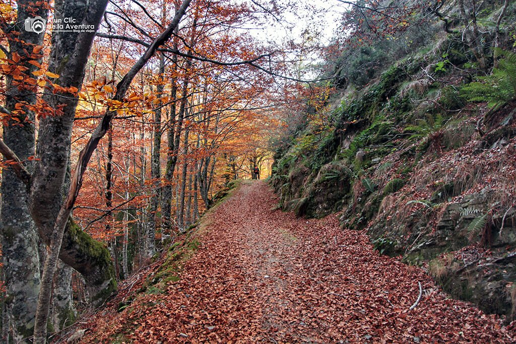 En busca del haya más famosa de Burgos - hayedo del río Urbión