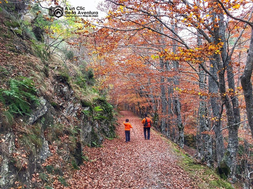 Camino de regreso del Hayedo del Río Urbión