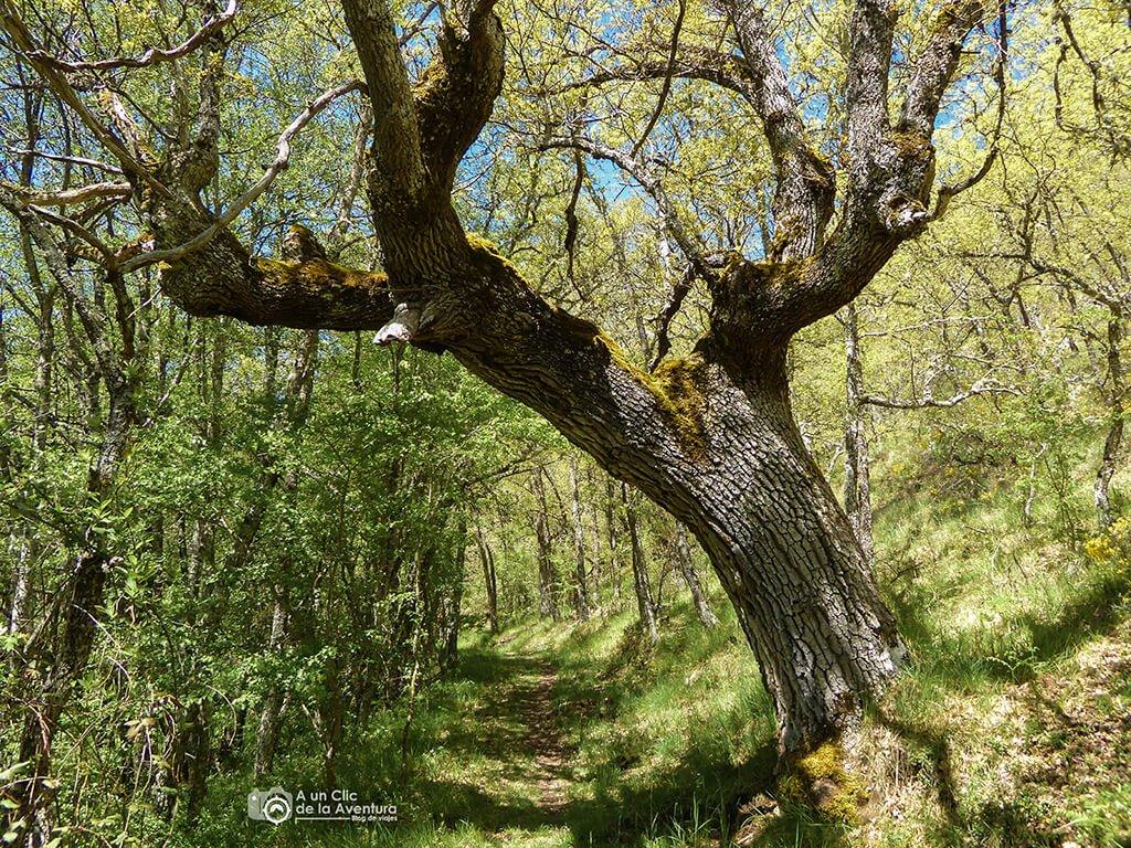 Vegetación del Alto Rudrón - ruta por el Alto Rudrón