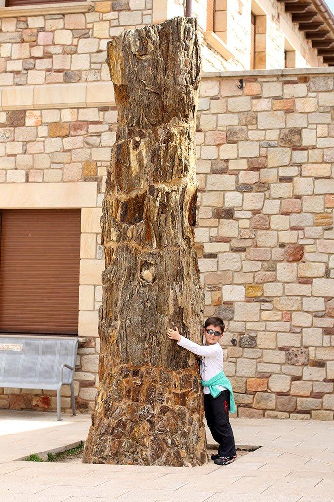Árbol fósil de Hacinas - qué ver y hacer en la Sierra de la Demanda de Burgos