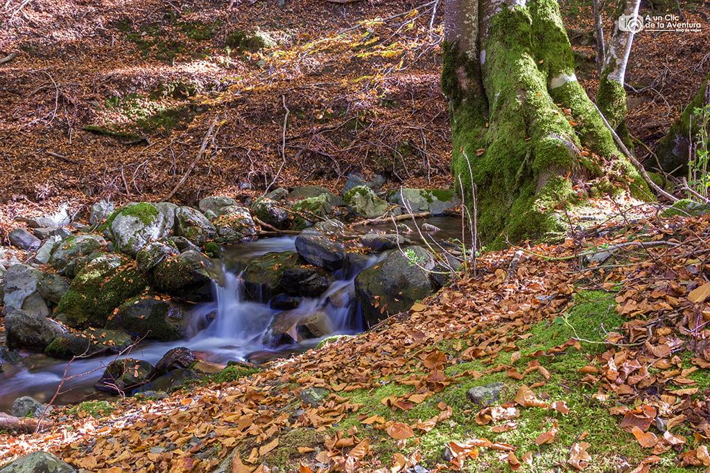 Hayedo de Santa Cruz del Valle Urbión - que hacer en Burgos