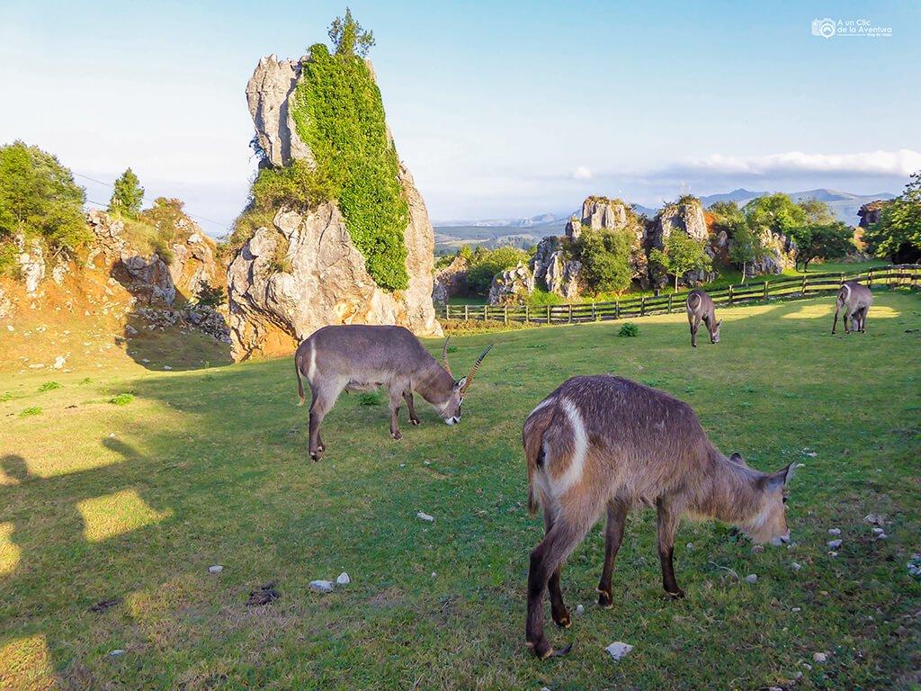 Parque de la Naturaleza de Cabárceno, Cantabria con niños
