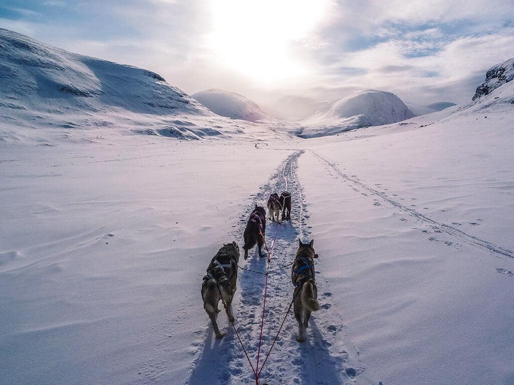 Trineo tirado por perros - Actividades al aire libre en invierno