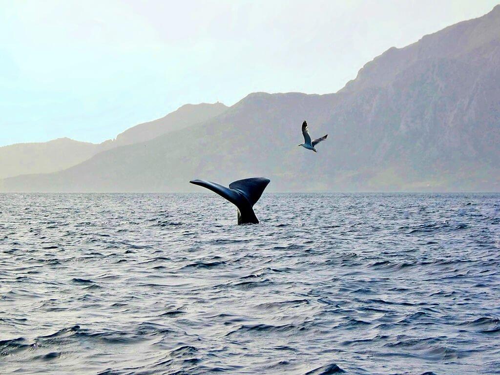 Ballena en el Estrecho de Gibraltar