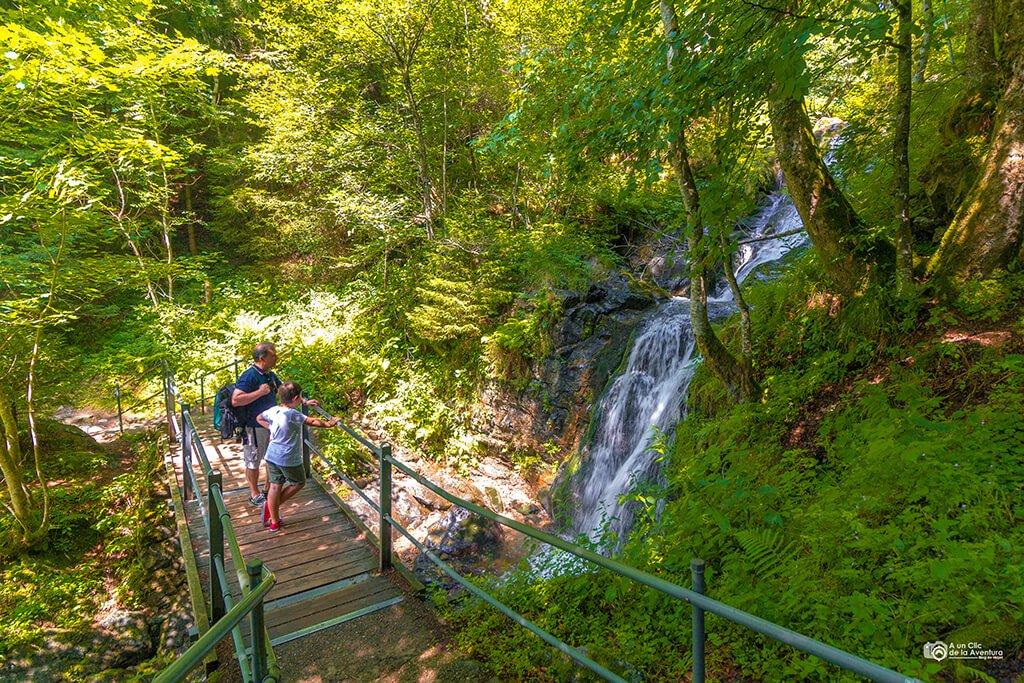 Cascadas Todtnauberg, Selva Negra