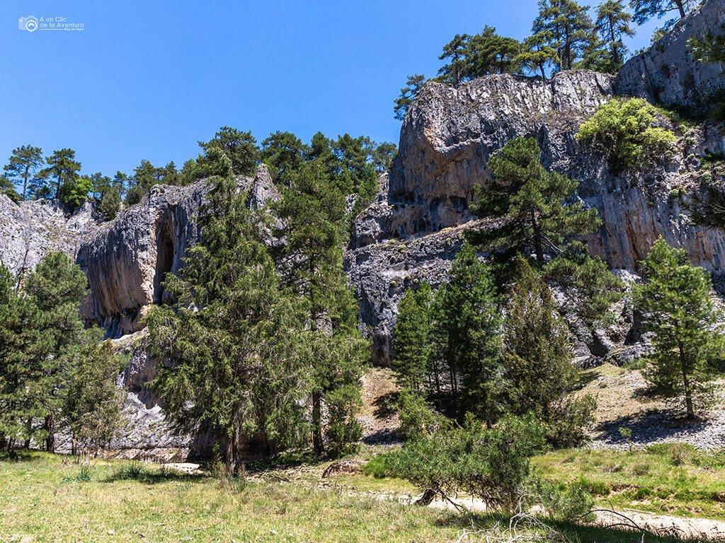Pinos en la ruta del Cañón del Río Lobos