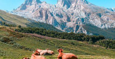 Que ver en Picos de Europa