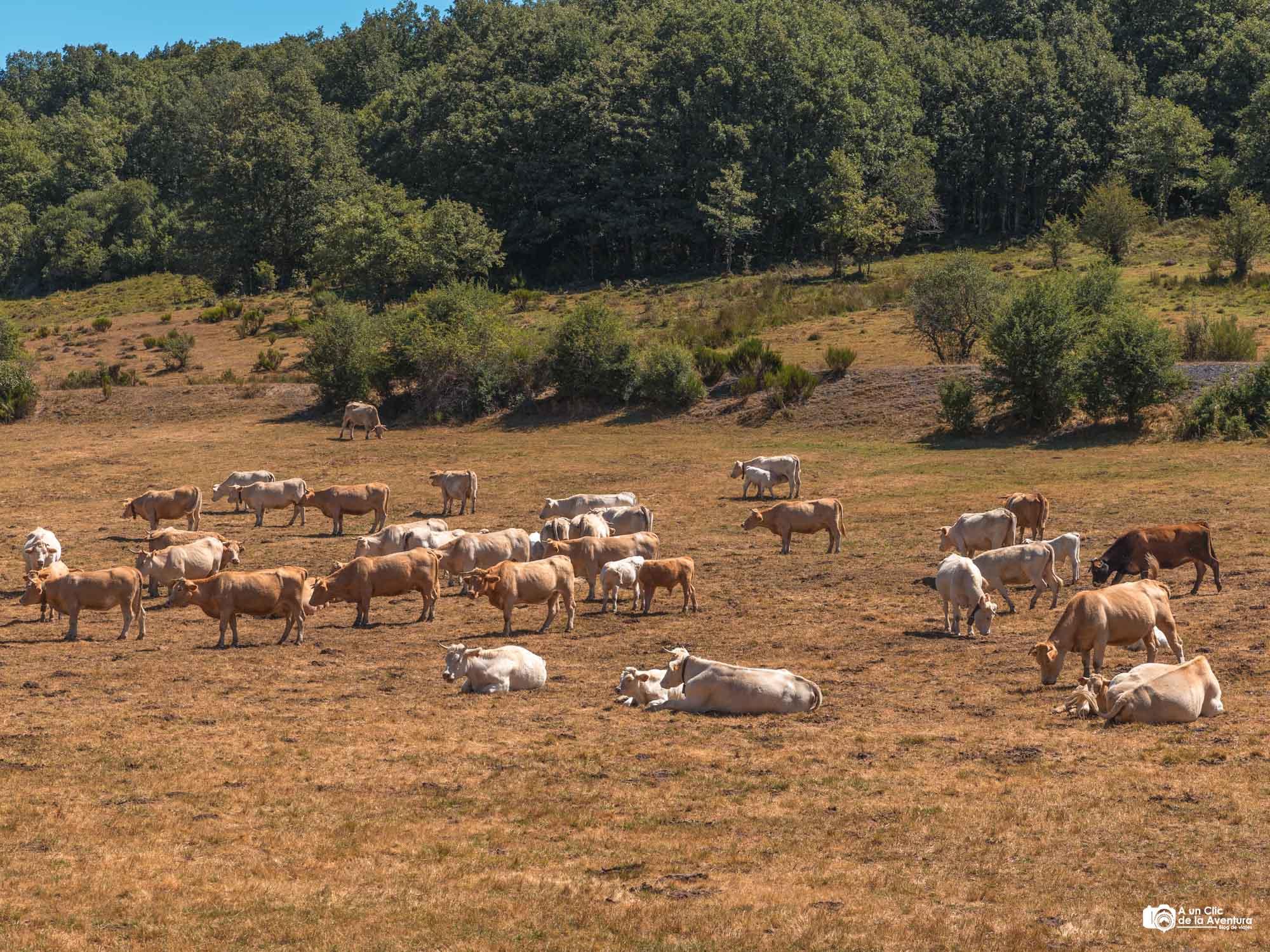 Zona de pasto en la ruta a la Tejeda de Tosande